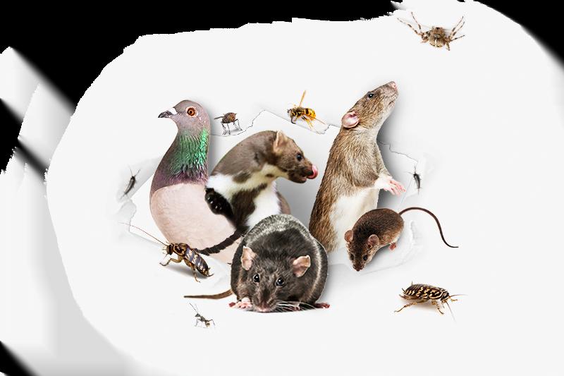 Ongediertespecialist-PestiNext-leert-je-ongedierte-en-andere-beestjes-in-huis-te-bestrijden-en-verjagen